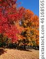 ต้นเมเปิล,สวน,สวนสาธารณะ 46168565