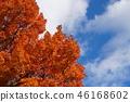 ต้นเมเปิล,สวน,สวนสาธารณะ 46168602