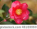 ไม้,โรงงาน,ดอกไม้ 46169069