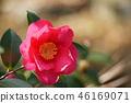 ไม้,โรงงาน,ดอกไม้ 46169071