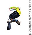 tropical bird isolated 46170884