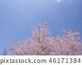 ซากุระ Fubuki ซากุระกลีบภาพวัสดุพื้นหลังวัสดุ 46171384