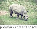 White rhinoceros - Ceratotherium simum simum 46172329
