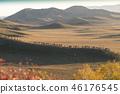 黃石駱駝 46176545