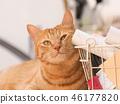 毛孩 貓 貓咪 46177820