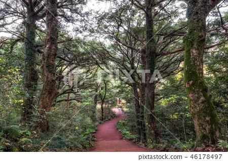 Bijarim forest trail 46178497