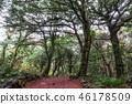 Bijarim forest trail 46178509