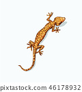 Gecko is sitting on flat gray surface.  46178932