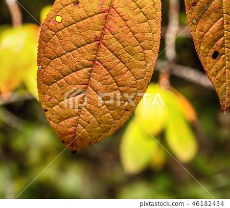 Macro photo of an autumn 46182434