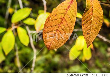 Macro photo of an autumn 46182440