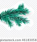 pine, branch, christmas 46183058