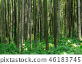 Bamboo Forest 46183745