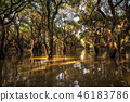 Tonle Sap Mangrove Forest 46183786