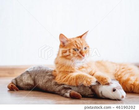 Cute ginger cat lying on floor with favorite toy 46190202
