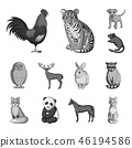 animals, collection, design 46194586