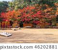 ใบไม้เปลี่ยนสีของสวน Suma Rikyu 46202881