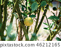 Orange of ripe in farm. 46212165