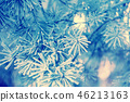 Pine branches covered with rime 46213163