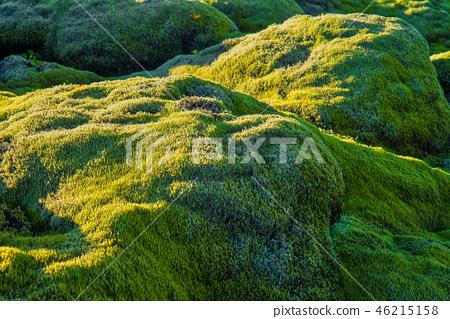Eldhraun lava field background, Iceland 46215158
