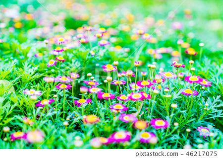 插花世界草地陸地上許多漂浮漂流的野花。 46217075