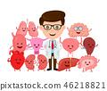 doctor organs organ 46218821