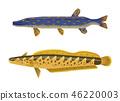 Predator Fish and Catfish Vector Illustration 46220003
