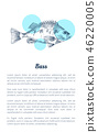 Bass or Bream Marine Creature Hand Drawn Poster 46220005