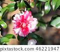 ดอกไม้,ไม้,โรงงาน 46221947