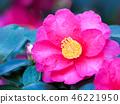 ดอกไม้,ไม้,โรงงาน 46221950