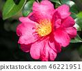 ดอกไม้,ไม้,โรงงาน 46221951