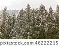 Pine Forest Winter Landscape 46222215