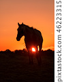 Wild Horse at Sunset 46223315