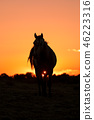 Wild Horse at Sunset 46223316