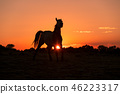 Wild Horse at Sunset 46223317
