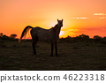 Wild Horse at Sunset 46223318