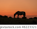 Wild Horse at Sunset 46223321