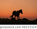 Wild Horse at Sunset 46223324