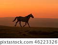 Wild Horse at Sunset 46223326