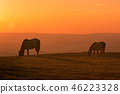Wild Horse at Sunset 46223328