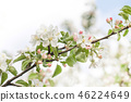 Beautiful spring floral nature landscape. Blossoming fruit tree branch in the garden, pink petal 46224649
