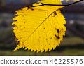 Yellow leaf 46225576