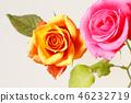 กุหลาบ,ดอกไม้,พื้นหลังสีขาว 46232719