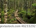 原始森林 夏天 夏 46233292