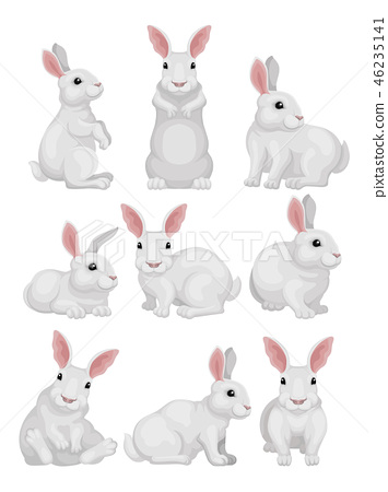 Flat vector set of white rabbit in different poses. Adorable mammal animal. Hare with long ears and 46235141