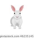 벡터, 만화, 토끼 46235145