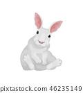 벡터, 만화, 토끼 46235149