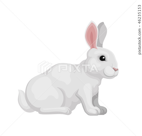 Lovely rabbit sitting isolated on white background, side view. Animal with white fur, long ears and 46235153