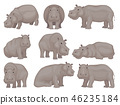 Set of large gray hippo in different actions. African animal. Wild creature. Wildlife theme. Flat 46235184