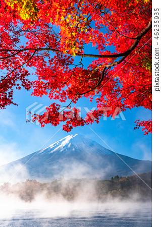 """""""山梨縣""""日本的秋/富士山和秋葉 46235935"""