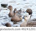 นก,แหล่งน้ำ,สระน้ำ 46241201